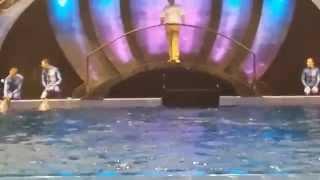 Dolphin Show at Georgia Aquarium
