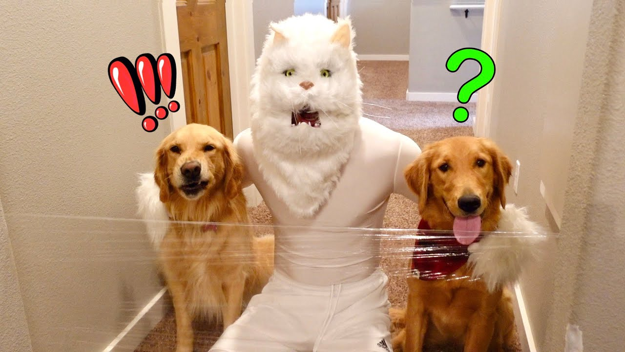 Cat & Dogs vs Invisible Wall!
