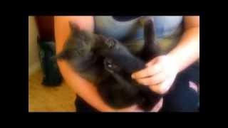 Katten Aska hatar sin svans