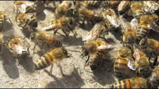 best pest control services in southwest utah