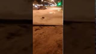 В Йошкар-Оле бегает животное
