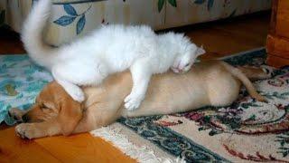 Приколы. Приколы+про кошек.Кто в доме хозяин 2?
