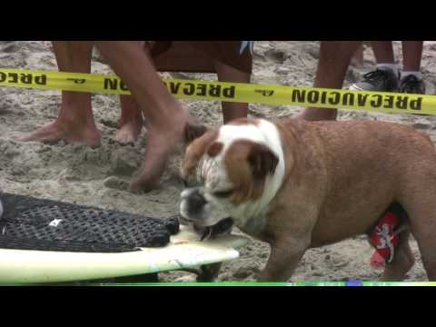 Cerritos Dog Surf Comp 2017