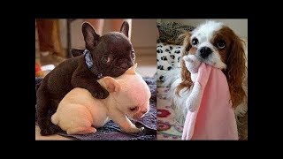 Funny baby animals Videos Compilation Funny moment of the animals