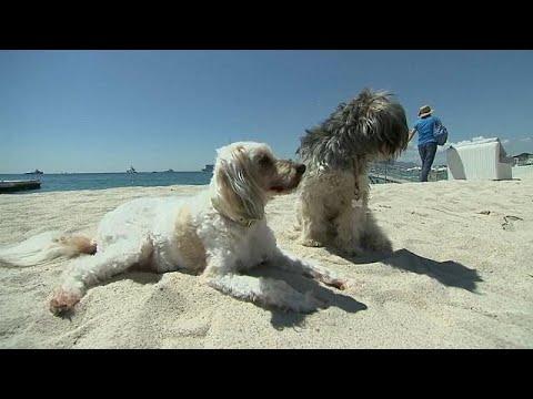 Chihuahua wins Palm Dog award at Cannes
