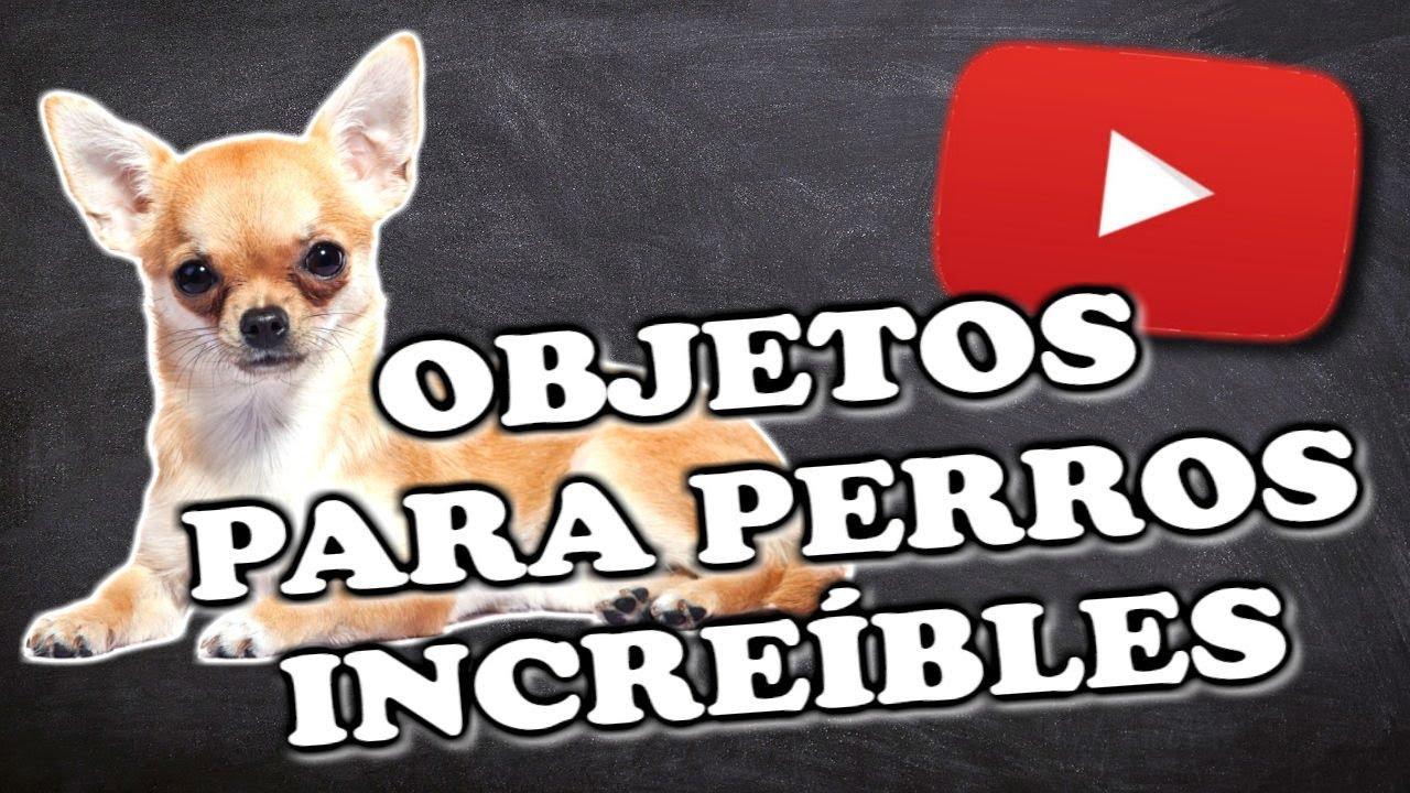 Dieta hepatica casera perros