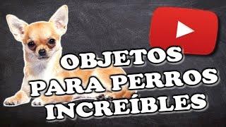 A Qué Edad Se Puede Bañar Un Chihuahua Dechihuahua Org