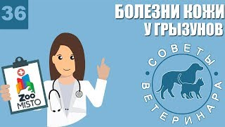 Болезни кожи у грызунов | Симптомы болезней | Профилактика болезней | Советы Ветеринара