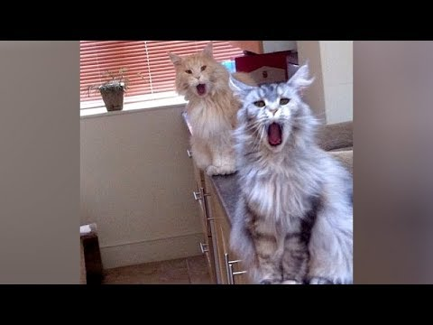 ANIMAL SOUNDS so WEIRD you'll be CONFUSED! – Super FUNNY ANIMAL VIDEOS