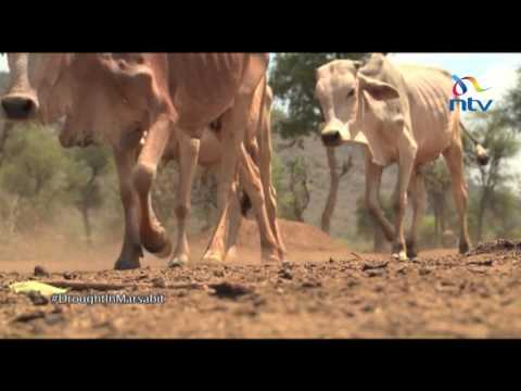 Pastoralists set to benefit from government's livestock insurance plan