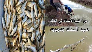 خيرات العراق لا تنتهي صيد السمك في اهوار العراق