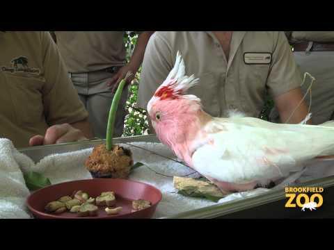 Cookie Cockatoo's 81st Birthday!