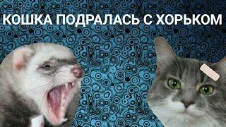 Маха в клетке у Семёна!!! Кошка и хорёк подрались!