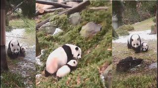 2021-02-23 Xiao Qi Ji Explores Outdoors With Mei!