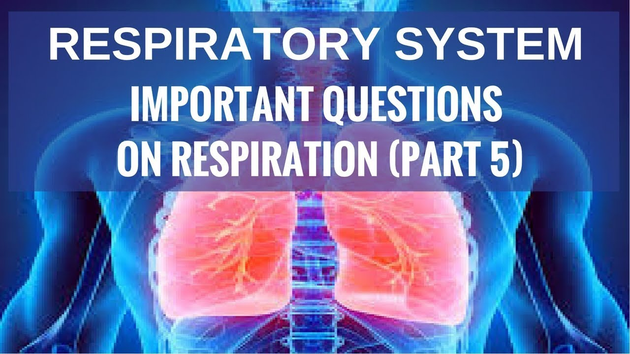 Respiratory System : Important Questions on Respiration (Part 5 ...
