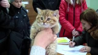 График работы в клубе кошек