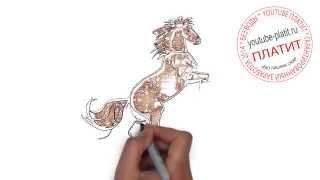 Как поэтапно нарисовать лошадь для начинающих(как нарисовать лошадь, как нарисовать лошадь поэтапно, как нарисовать карандашом лошадь, как нарисовать..., 2014-08-07T06:13:54.000Z)
