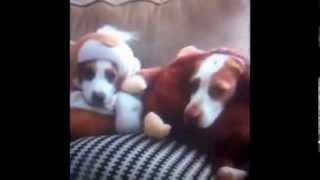 Приколы! Угарная подборка домашних животных 2014 ! Часть 2 Funny Cats Dogs Compilation