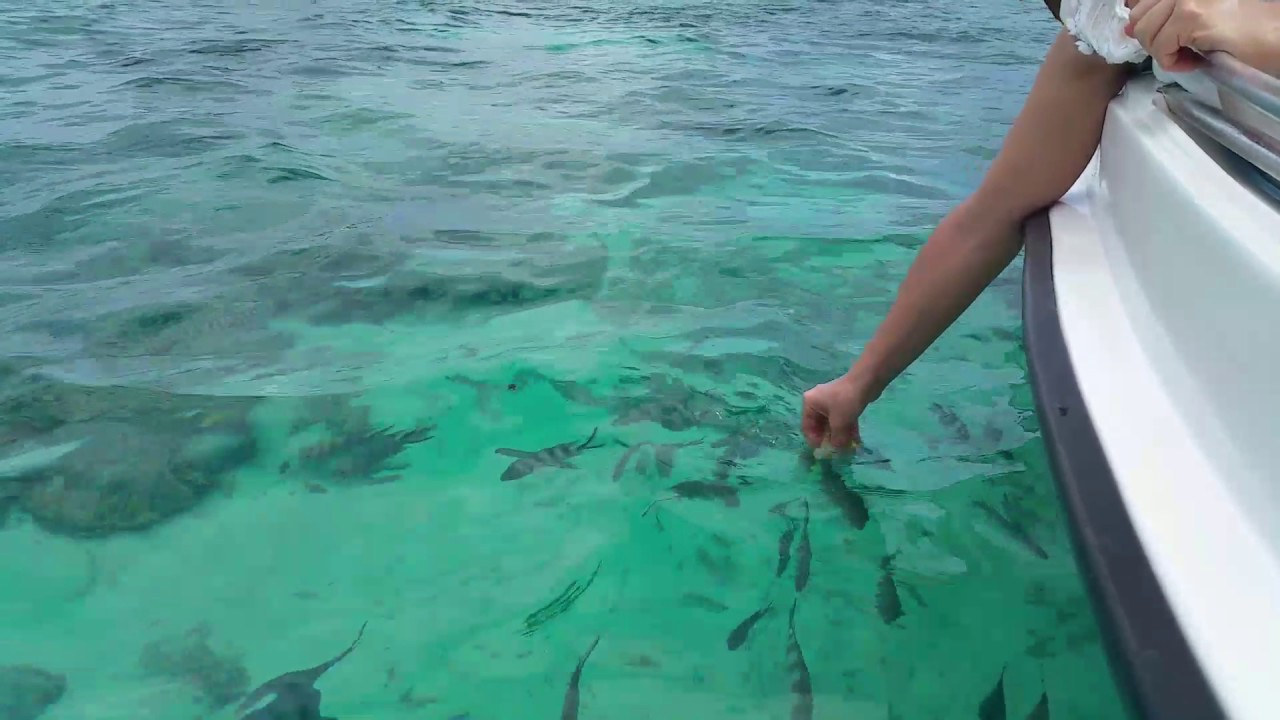 Mauritius Ambre Resort Spa Feeding Fish In The Tropical Lagoon