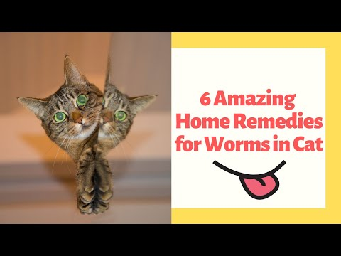 6 Amazing Home Remedies For Worms In Cat
