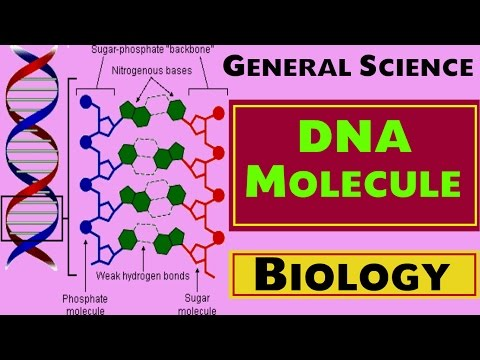 Biology - DNA MOLECULE Chapter-6 (SSC , UPSC , NDA , CDS , State PSC etc)