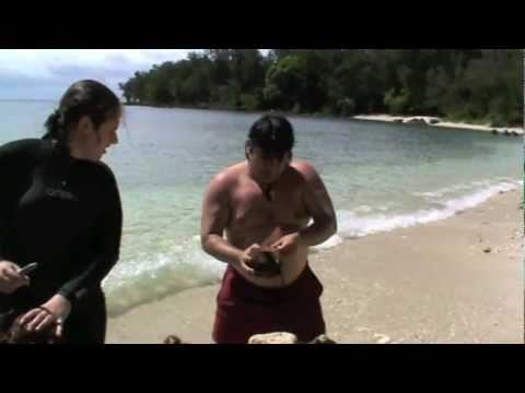 Sailaway Cruises diving in Vanuatu