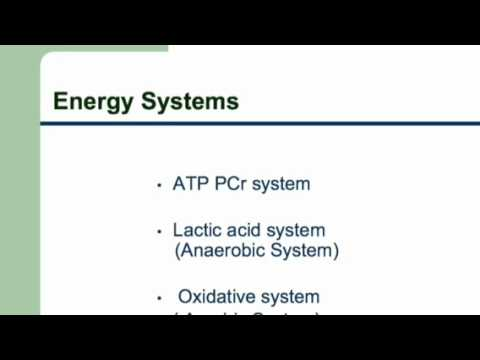 exercise physiology energy systems