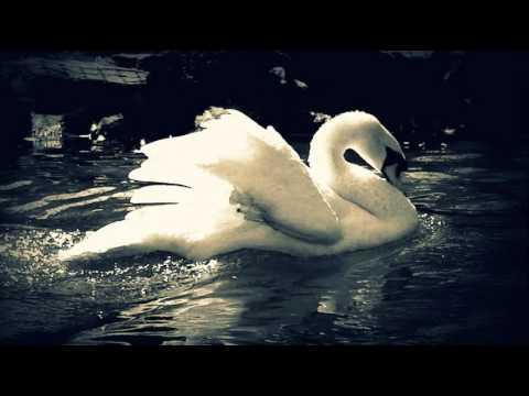 Tchaikovsky  Swan Lake Finale