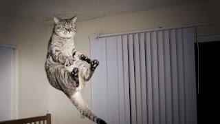 cat vines