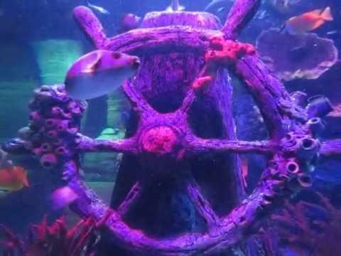 SeaLife Aquarium in Auburn Hills, Michigan