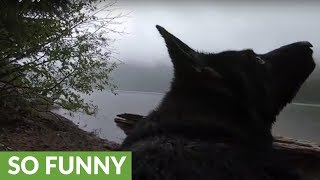 GoPro-wearing dog gets the zoomies in the woods
