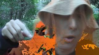 Смотреть сериал муз сериал Mushrooms - aliens   161    серия онлайн
