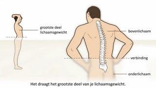 Lage rugpijn - Soorten en oorzaak