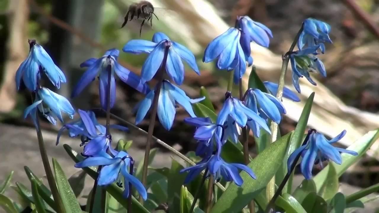 Wiosenne Kwiaty Youtube