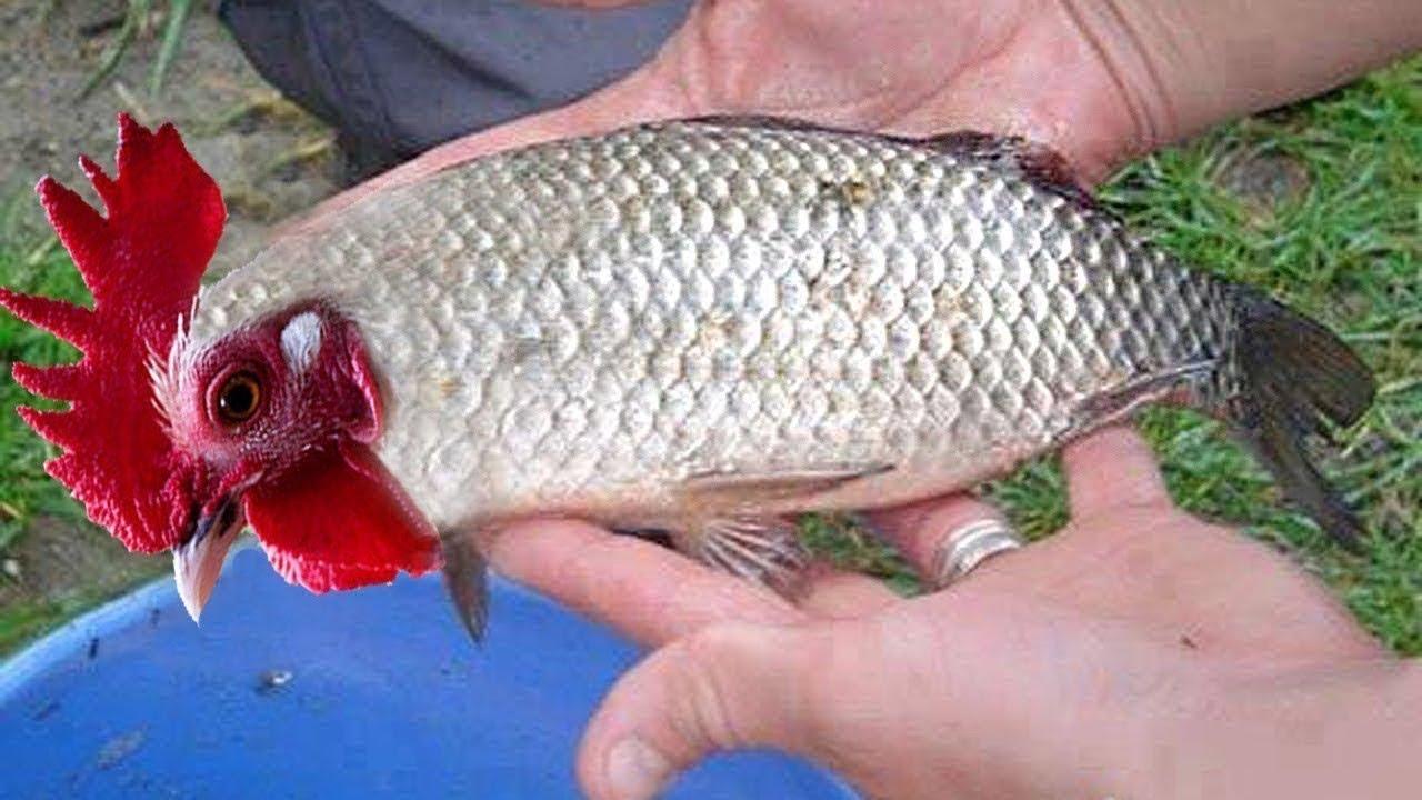 10 ऐसी मछलिया जिन्हें देखने के लिए नसीब लगता है | 10 Rare And Amazing Fishes In The World