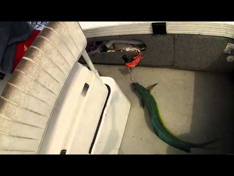 Farther's day fishing in Grand Cayman 21/06/2015