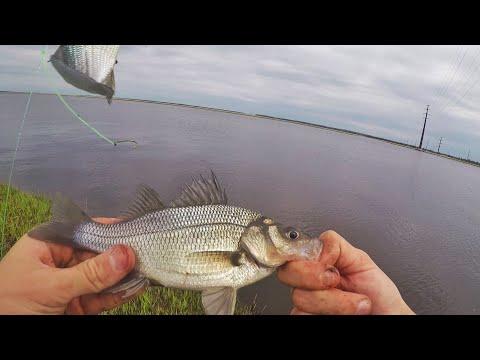 Spring Perch Fishing The Mullica River! (white Perch)