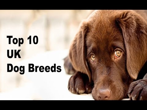 Most Popular Dog Breed