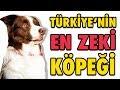 Türkiye'nin En Zeki Köpeği Max - Şampiyon Köpek OHA Diyorum'da