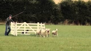 National Sheepdog Trials 2015