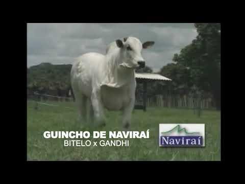 LOTE 15 - GUINCHO DE NAVIRAÍ