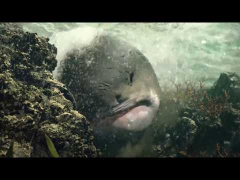 This is Computer Generated imagery Shark created using Houdini by Augus Zou