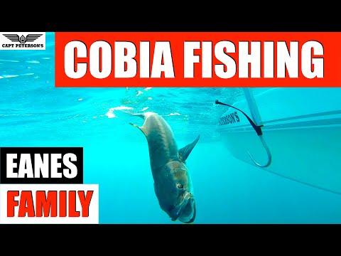 Eanes Family Cobia Fishing - St George Island, FL