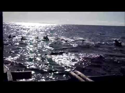 Dolphin Watching at Balicasag Island, Bohol, Philippines