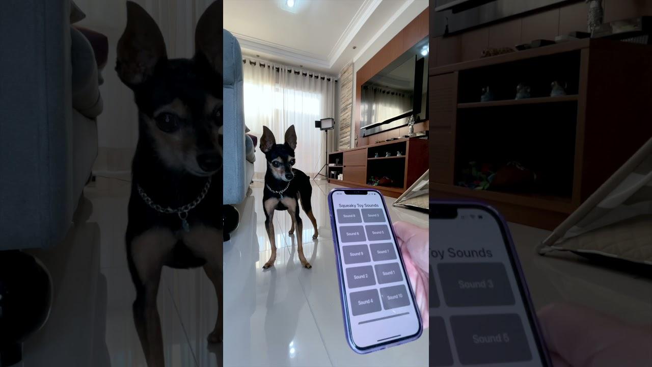 Download #shorts Testei aplicativos para cachorro com o meu cachorro!❤️ PEQUENOS PRÍNCIPES