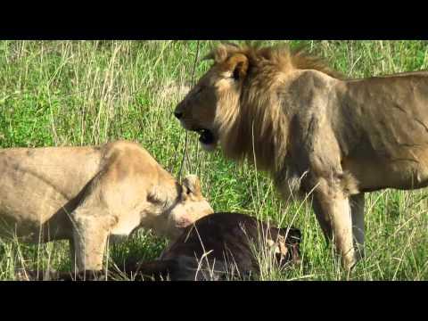 Kenia - Memorias de África-Out Of Africa Soundtrack Suite (John Barry)
