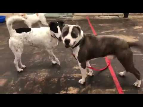 Houston Pets Alive! starts play groups for shelter dogs
