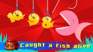 12345 Once I Caught A Fish Alive   Nursery Rhymes for kids   JellyBug