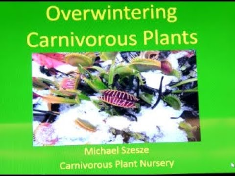 HOW TO Overwinter Carnivorous Plants with an EXPERT!