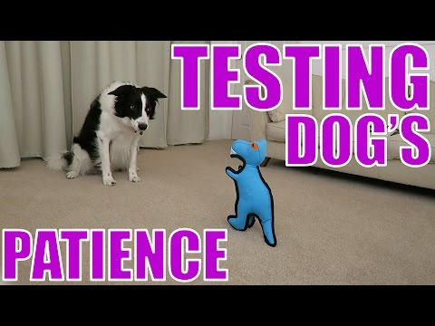Dog's Test of Patience | #TOD VLOG
